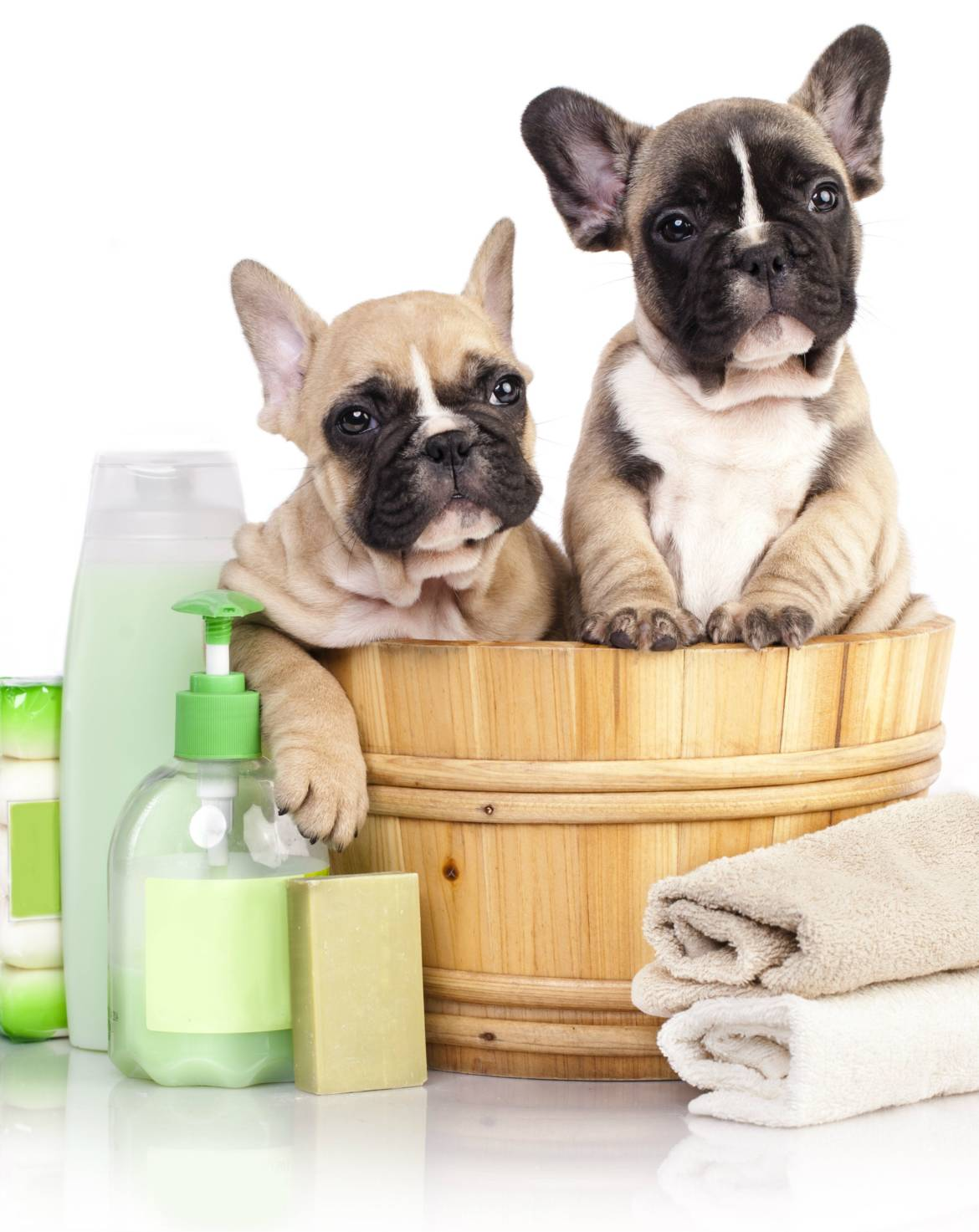 dog-grooming-services-c.jpg