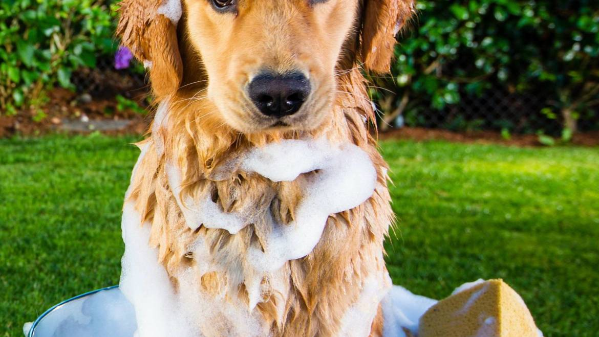4 Signs Your Dog May Need to be Groomed