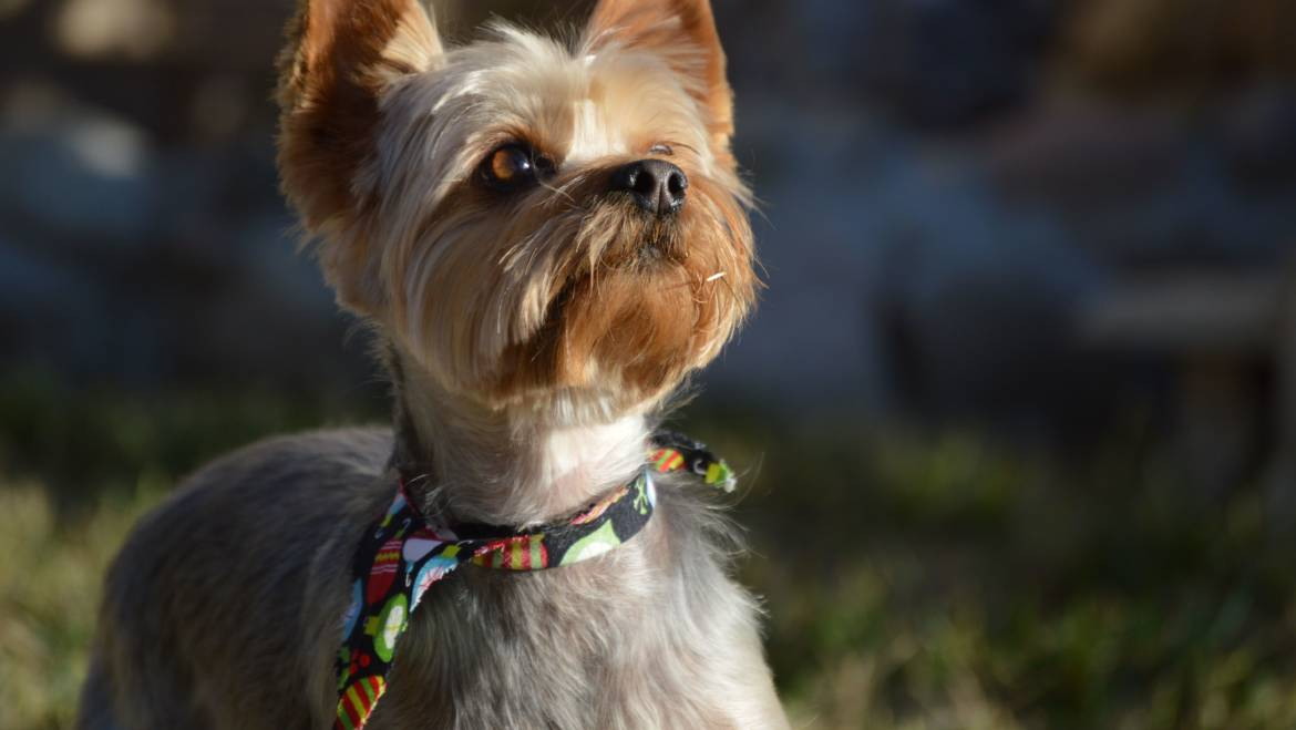 The Real World Benefits of Using a Mobile Dog Groomer